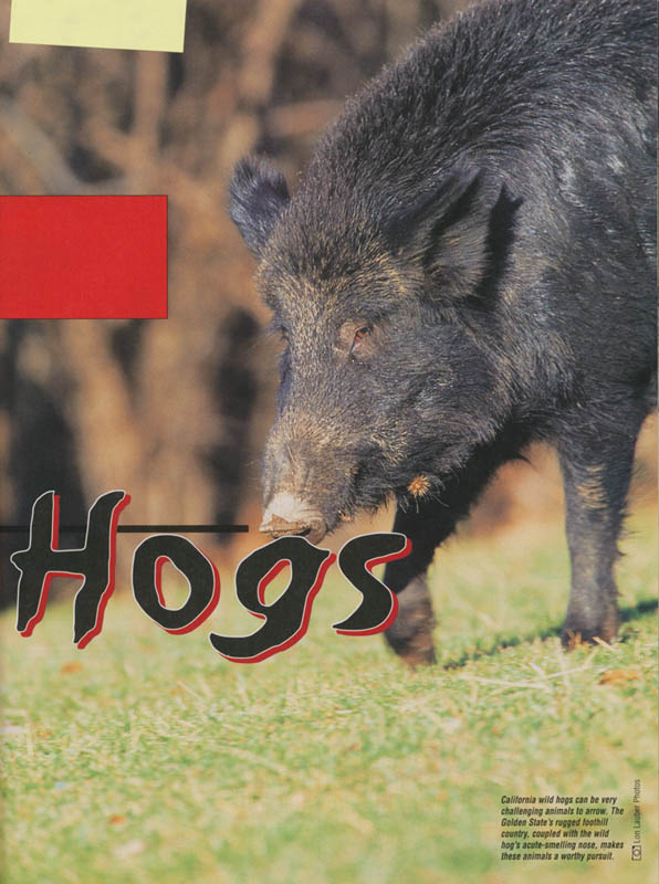 California_Wild_Hogs_3