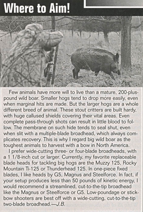 California_Wild_Hogs_8