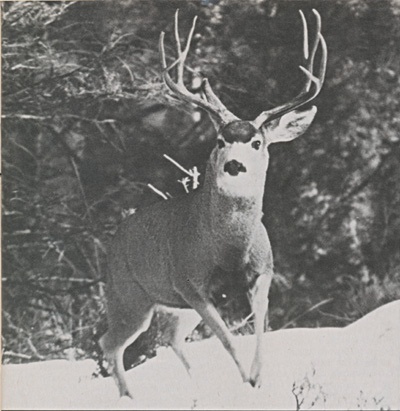 Deer_Hunting_With_A_Pioneer_4