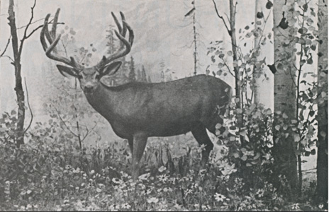 Deer_Hunting_With_A_Pioneer_6