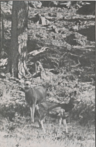 Deer_Hunting_With_A_Pioneer_7