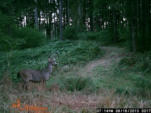 This is during the archery season in Oregon. Even 3 X 3!